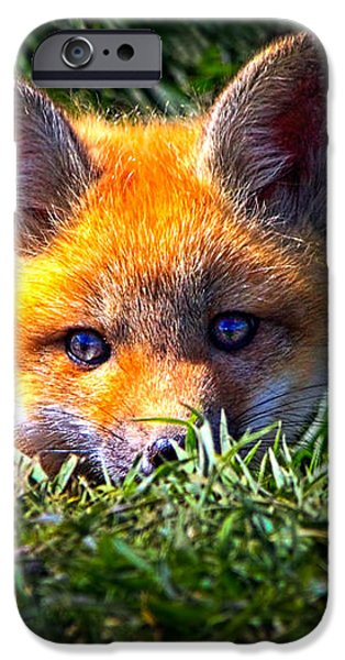 Transcendental iPhone Cases - Little Red Fox iPhone Case by Bob Orsillo