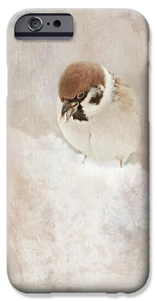 Animal Picture iPhone Cases - Little Sparrow iPhone Case by Heike Hultsch