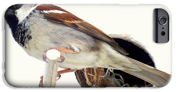 Sparrow iPhone Cases - Little Sparrow iPhone Case by Karen Wiles