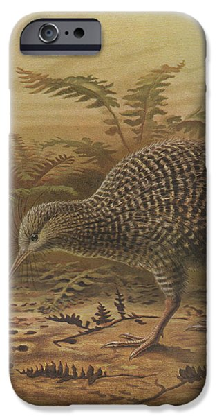 Kiwi iPhone Cases - Little Spotted Kiwi iPhone Case by J G Keulemans