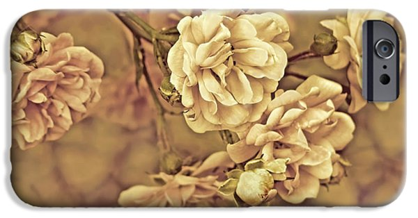 Peach Roses iPhone Cases - Little Tea Roses Vintage iPhone Case by Jennie Marie Schell