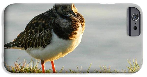 Sea Birds iPhone Cases - Little Turnstone iPhone Case by Sharon Lisa Clarke