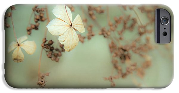 Gary Heller iPhone Cases - Little White flowers - Floral - The little things in Life iPhone Case by Gary Heller