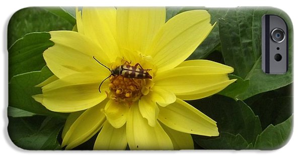 Bugs Pyrography iPhone Cases - Little Yellow Bug iPhone Case by Melissa Quillen