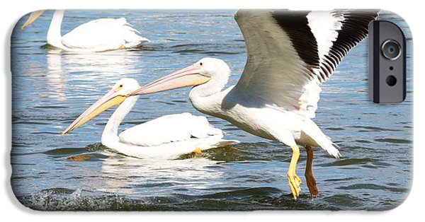 Action Shot iPhone Cases - Live Action - Pelican in Flight iPhone Case by Carol Groenen