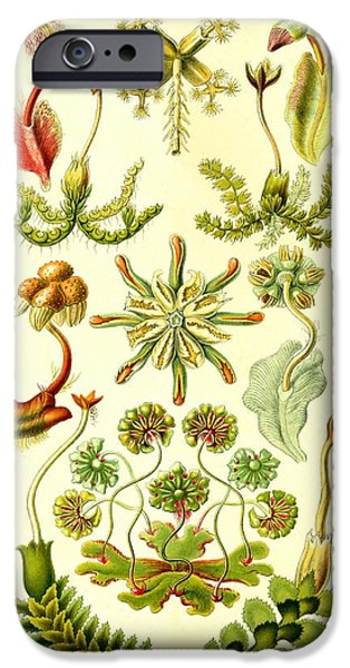 Haeckel iPhone Cases - Liverworts Moss Brunnenlebermoos Haeckel Hepaticae iPhone Case by Movie Poster Prints