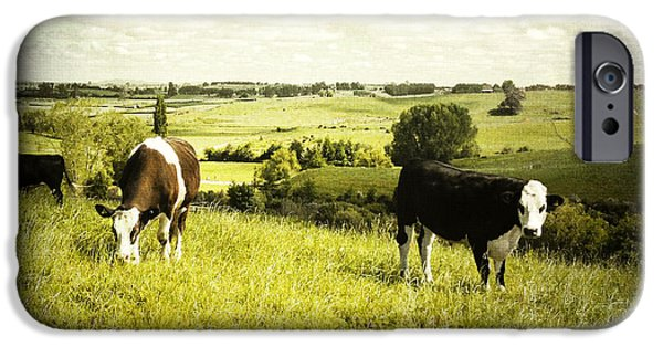 Animals Photographs iPhone Cases - Livestock  iPhone Case by Les Cunliffe