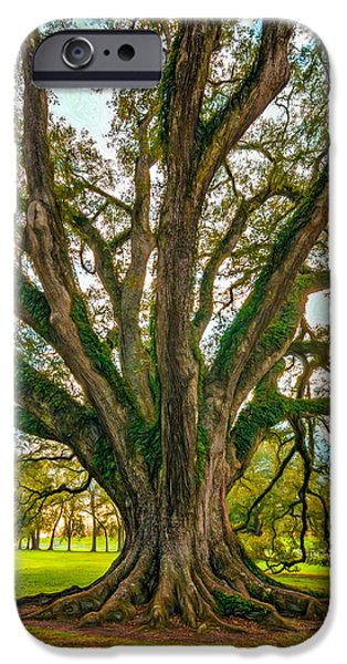 Oak Alley Plantation iPhone Cases - Living Art - Paint iPhone Case by Steve Harrington