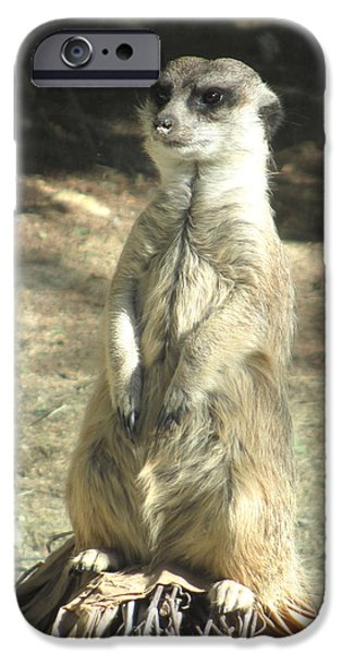 Meerkat Digital Art iPhone Cases - Living Desert Meerkat iPhone Case by Barbara Snyder