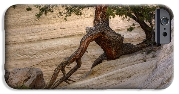 Tree Roots iPhone Cases - Living Gracefully iPhone Case by Bob Christopher