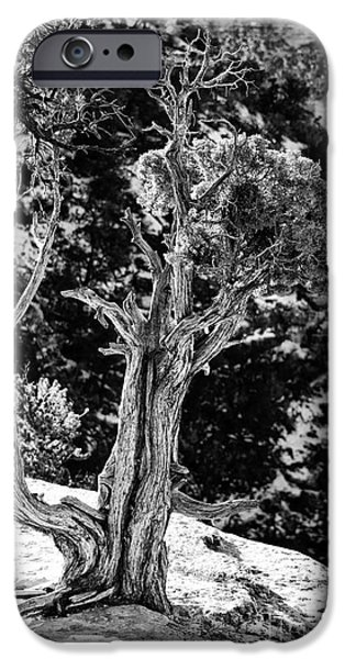 Pines iPhone Cases - Living on the Edge in Black and White iPhone Case by Lee Craig