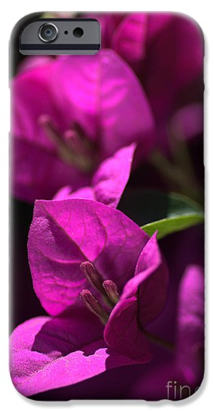 Living With Joy iPhone Cases - Living With Bougainvillea iPhone Case by Joy Watson