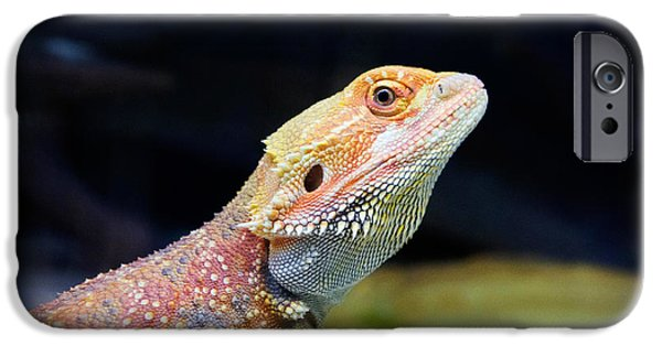 Cut-outs Paintings iPhone Cases - lizard Bearded Dragon iPhone Case by Celestial Images