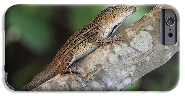Florida Wildlife iPhone Cases - Lizard on Tree Florida Anole iPhone Case by Rebecca Brittain