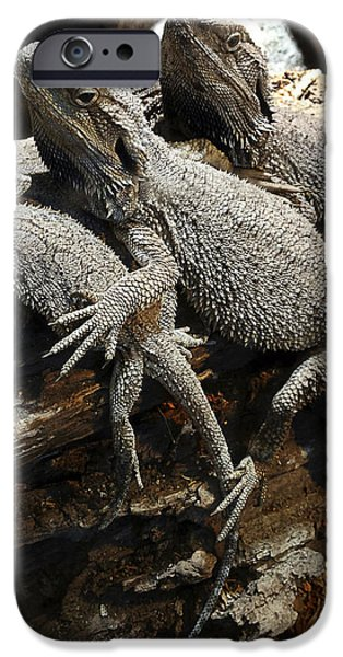 Lizards iPhone Case by Les Cunliffe