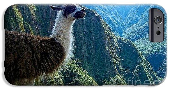 Built Structure iPhone Cases - Llama at Machu Picchu Ruins iPhone Case by Lynn R Morris