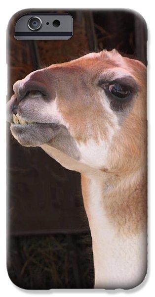Llama iPhone Cases - Llama iPhone Case by Ellen Henneke