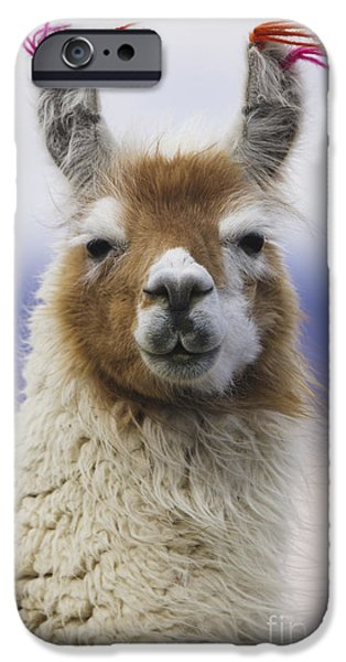 Recently Sold -  - Fauna iPhone Cases - Llama in Bolivia iPhone Case by Art Wolfe MINT