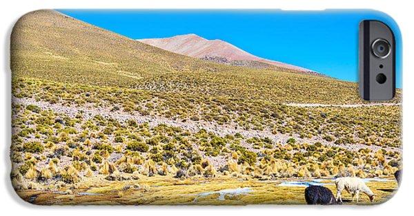 Llama iPhone Cases - Llama Landscape iPhone Case by Jess Kraft