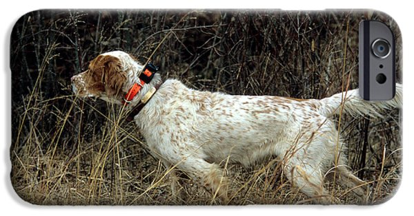 Setter Pointer iPhone Cases - Llewellyn Setter iPhone Case by William H. Mullins
