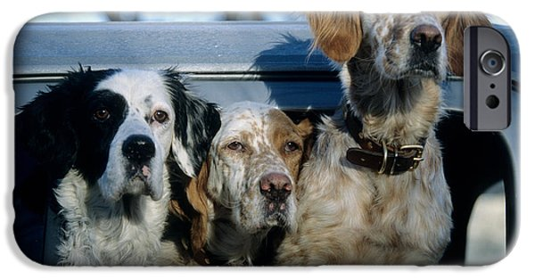 Setter Pointer iPhone Cases - Llewellyn Setters iPhone Case by William H. Mullins