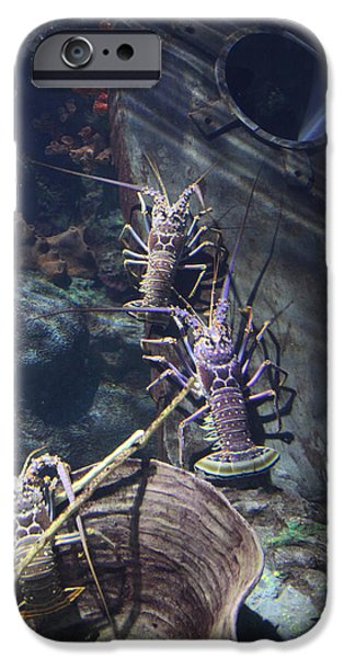 Underwater Photos iPhone Cases - Lobster iPhone Case by Donna Corless