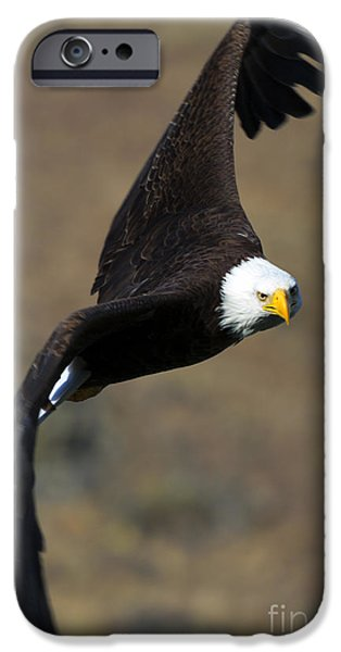 Eagle iPhone Cases - Locked In iPhone Case by Mike  Dawson