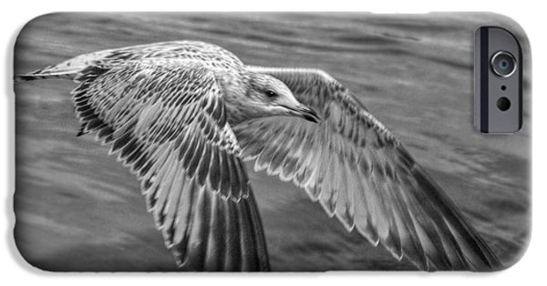 Flying Seagull iPhone Cases - Locked On iPhone Case by Linda Unger