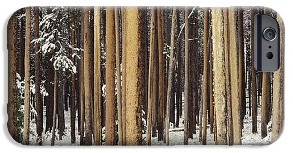 Snow iPhone Cases - Lodgepole Pines And Snow Grand Teton iPhone Case by Panoramic Images