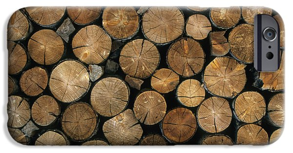 Nature Abstracts iPhone Cases - Log Showing Growth Rings iPhone Case by Martin Withers