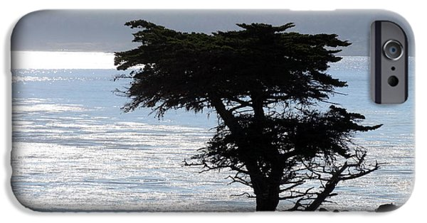 Silhoette iPhone Cases - Lone Cypress Silhoette iPhone Case by Deborah Berry