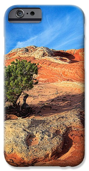 Lone Juniper iPhone Case by Inge Johnsson