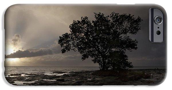 Islamorada iPhone Cases - Lone Mangrove iPhone Case by Keith Kapple