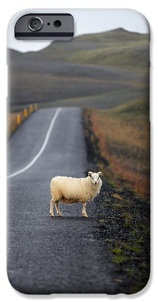 Asphalt iPhone Cases - Lone sheep on the road in Iceland iPhone Case by Yevgen Timashov