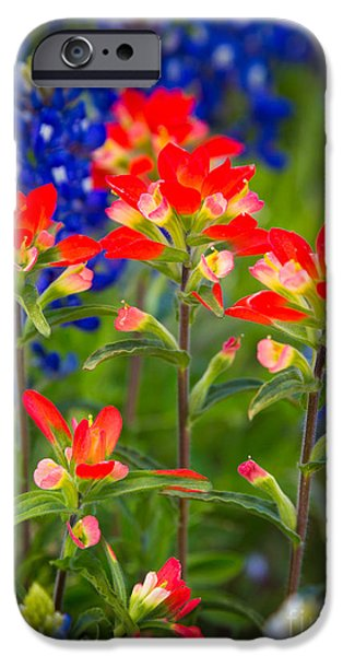 States iPhone Cases - Lone Star Blooms iPhone Case by Inge Johnsson
