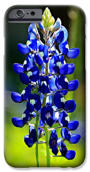 Rural iPhone Cases - Lone Star Bluebonnet iPhone Case by Stephen Stookey