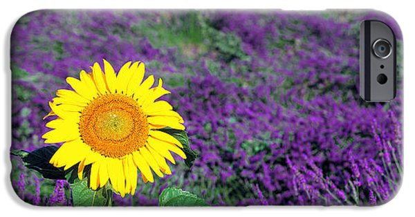 Sunflower Fields iPhone Cases - Lone Sunflower In Lavender Field France iPhone Case by Panoramic Images