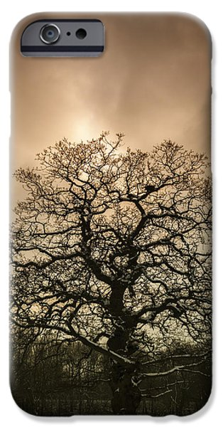 Winter Trees Photographs iPhone Cases - Lone Tree iPhone Case by Amanda And Christopher Elwell