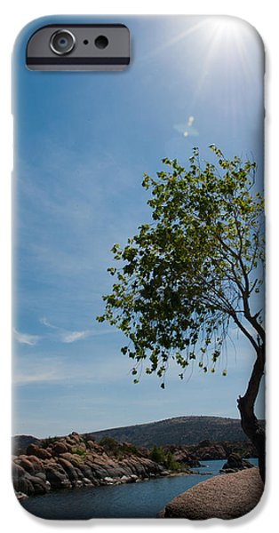 Watson Lake iPhone Cases - Lone Tree iPhone Case by Shannon Hastings