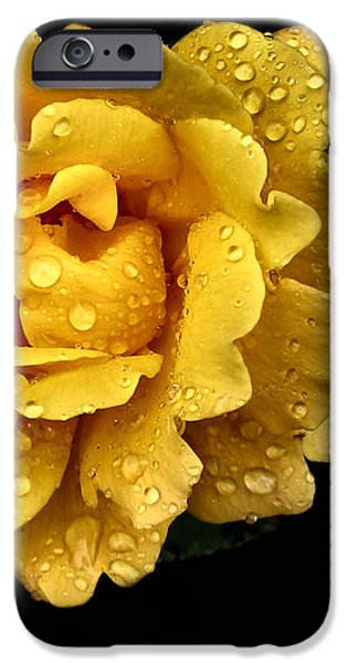 Lone Yellow Rose iPhone Case by Stephanie Hollingsworth
