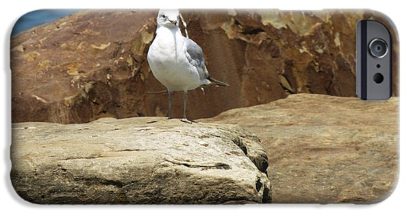 Willow Lake iPhone Cases - Lonely Bird  iPhone Case by Samantha Purea