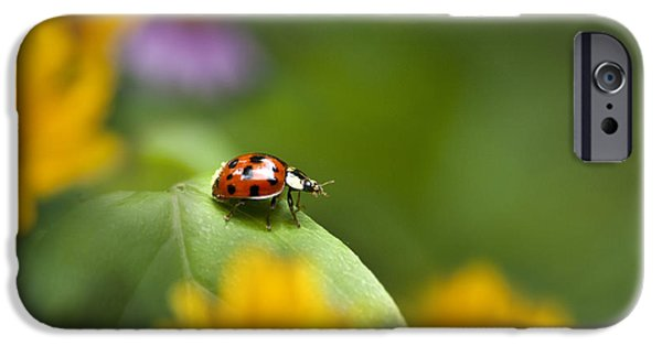 Ladybug iPhone Cases - Lonely Ladybug iPhone Case by Christina Rollo