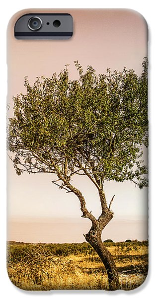 Young Photographs iPhone Cases - Lonely Tree iPhone Case by Carlos Caetano