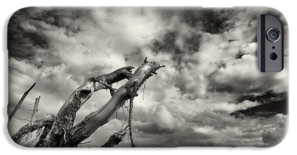 Tree Roots Photographs iPhone Cases - Lonely Tree Roots Reaching For The Sky iPhone Case by Christian Lagereek