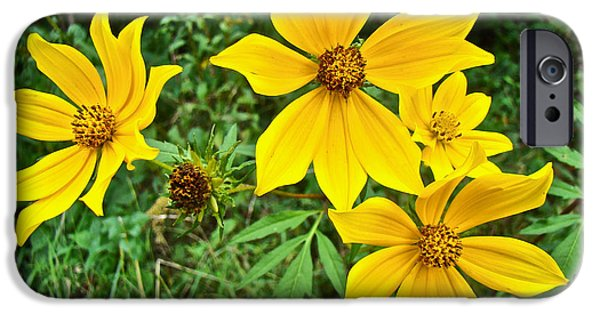 Biden iPhone Cases - Long-Bracted Tickseed Sunflower Wildflower - Bidens polylepis iPhone Case by Mother Nature