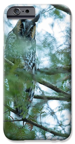 Pines iPhone Cases - Long-eared Owl 1 iPhone Case by Everet Regal