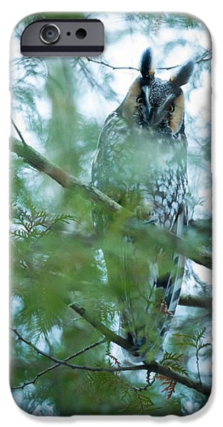Pines iPhone Cases - Long-eared Owl 2 iPhone Case by Everet Regal