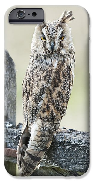 Fauna iPhone Cases - Long Eared Owl iPhone Case by Tim Gainey