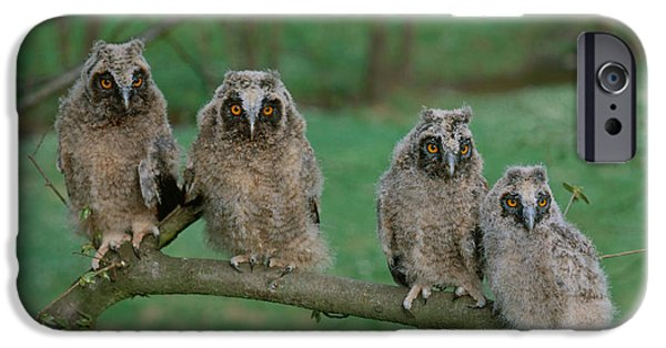 Baby Bird iPhone Cases - Long-eared Owls iPhone Case by Hans Reinhard