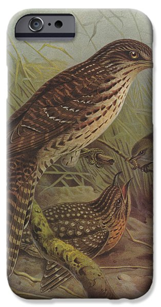 Cuckoo iPhone Cases - Long Tailed Cuckoo and Grey Warbler iPhone Case by J G Keulemans